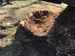 dug out tree stump