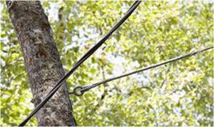 braced tree in rockaway