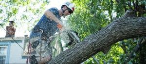 man trimming tree branch