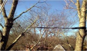braced trees