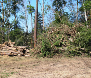 removed trees