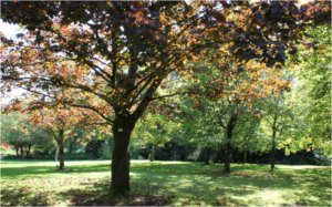 example of tree services in rockaway nj