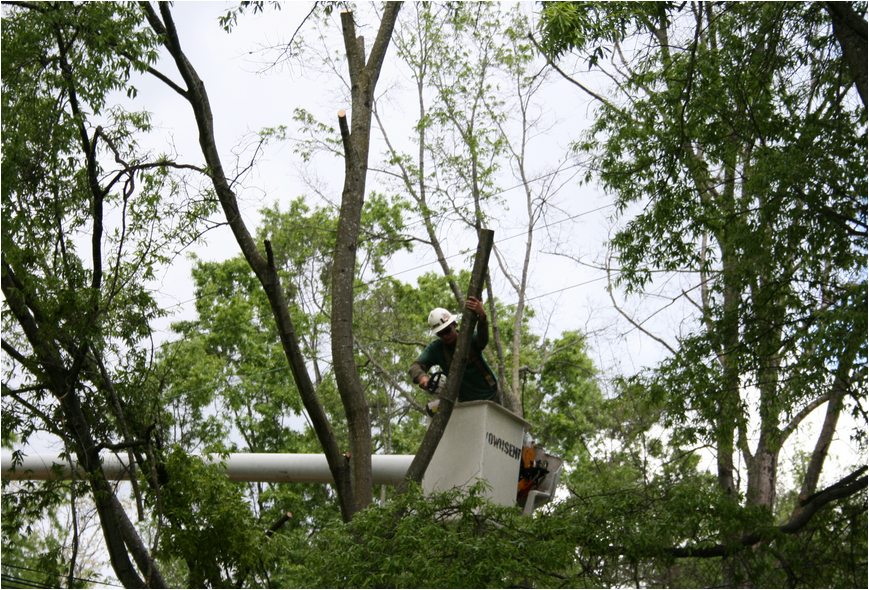 Tree Removal Rockaway NJ