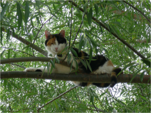 emergency cat stuck in tree