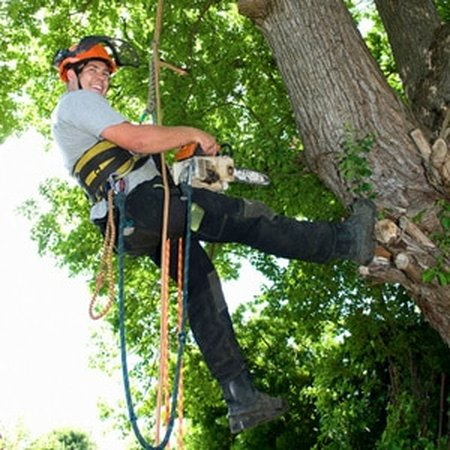 Tree Service Safety