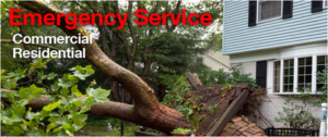 emergency tree service banner