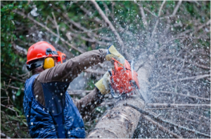 man performing tree cutting services